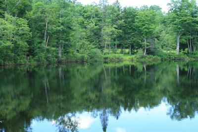 Parksville NY Residential Lots & Land For Sale: $319,000