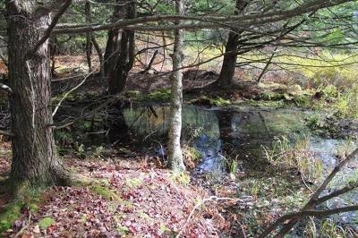 Livingston Manor NY Residential Lots & Land For Sale: $79,900