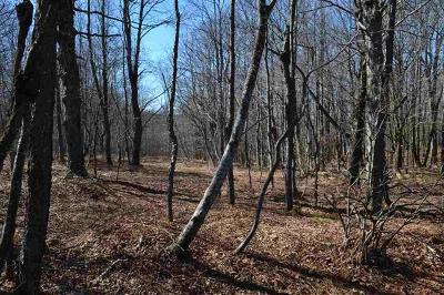 Residential Lots & Land For Sale: Knickerbocker