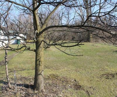 Columbus Residential Lots & Land For Sale: 12th Avenue