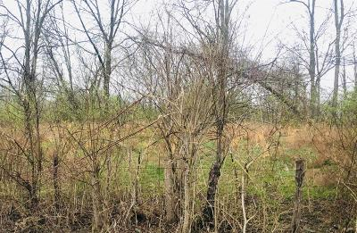Warren County Residential Lots & Land For Sale: Foster Maineville Road