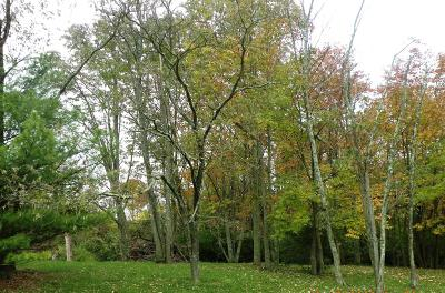 Hidden Valley Residential Lots & Land For Sale: Greenlawn Way