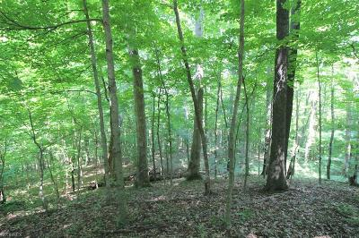Perry County Residential Lots & Land For Sale: Town Hwy 135