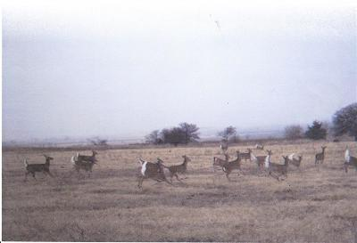 Farm & Ranch For Sale: Cr 1290