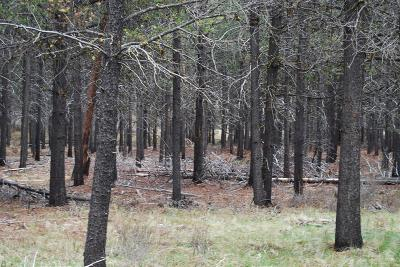 Crook County, Deschutes County, Jefferson County, Klamath County, Lake County Residential Lots & Land For Sale: Caribou Drive