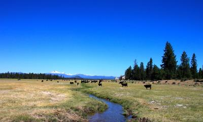 La Pine Farm & Ranch For Sale: 53200 S Hwy 97