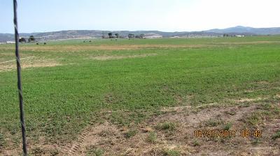 Prineville Farm & Ranch For Sale: 4243 Northwest Elliott Lane