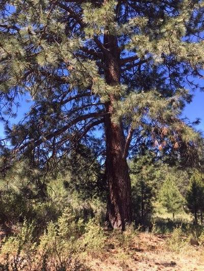 Bend Residential Lots & Land For Sale: 59861 Cheyenne Road
