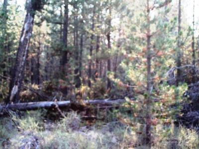 La Pine, Crescent, Gilchrist Residential Lots & Land For Sale: 50950 Coyote
