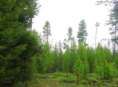La Pine Residential Lots & Land For Sale: 16036 Amber Lane