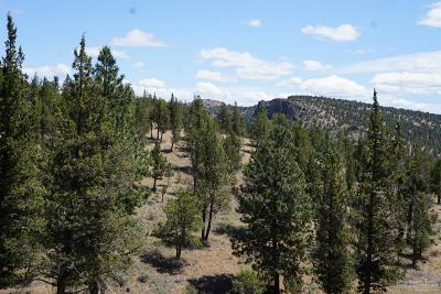 Prineville Residential Lots & Land For Sale: Northwest Circle Street