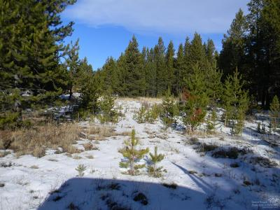 Bend Residential Lots & Land For Sale: 17036 Downey Road
