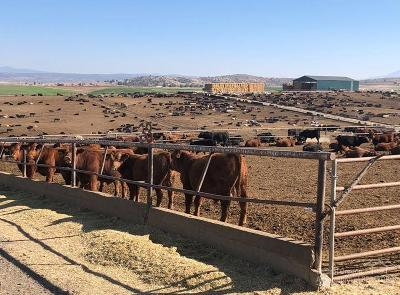Madras Farm & Ranch For Sale: 3451 SW Highway 97