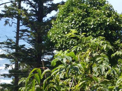Depoe Bay Residential Lots & Land For Sale: T/L 8400 NE Bensell Place