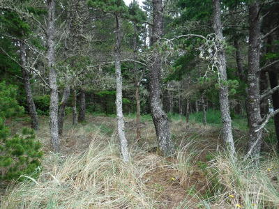 Waldport OR Residential Lots & Land For Sale: $65,000