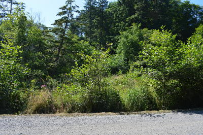 Neskowin Residential Lots & Land For Sale: TL 226 South Beach Road