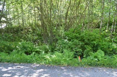 Neskowin Residential Lots & Land For Sale: TL 221 Nescove Drive