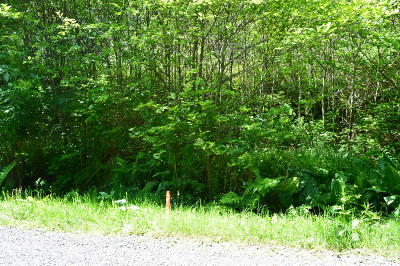Neskowin Residential Lots & Land For Sale: TL 213 Nescove Drive