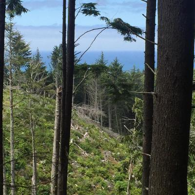 Salishan Hills Residential Lots & Land For Sale: Lot 520 Ocean View Ln