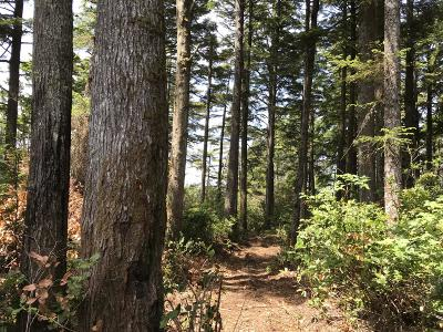 Depoe Bay, Gleneden Beach, Lincoln City, Newport, Otter Rock, Seal Rock, South Beach, Tidewater, Toledo, Waldport, Yachats Residential Lots & Land For Sale: TL 900 NW Seal Rock St.