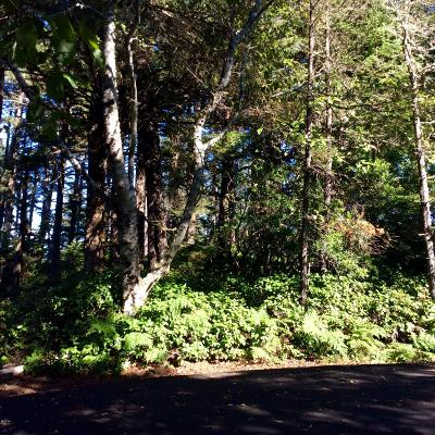Depoe Bay, Gleneden Beach, Lincoln City, Newport, Otter Rock, Seal Rock, South Beach, Tidewater, Toledo, Waldport, Yachats Residential Lots & Land For Sale: Lot 17 SW Walking Wood
