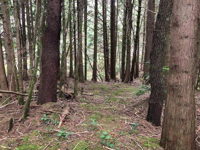 Depoe Bay Residential Lots & Land For Sale: Lot 143 SW Tintinnabulary