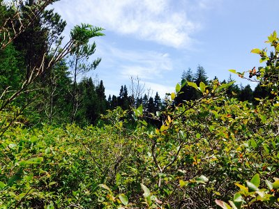 Port Orford Residential Lots & Land For Sale: Blueberry Ln