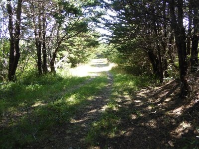 Gold Beach Residential Lots & Land For Sale: 34313 Ophir Rd
