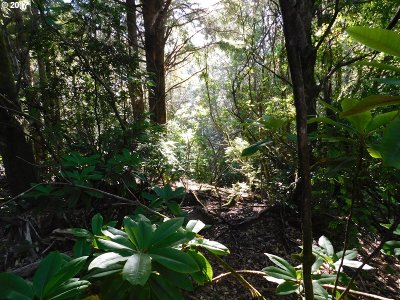 Port Orford Residential Lots & Land For Sale: Old Mill Rd #600
