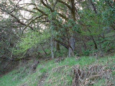 Roseburg Residential Lots & Land For Sale: Black Oak Dr