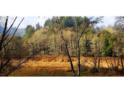 Coos Bay Farm & Ranch For Sale: Daniels Creek