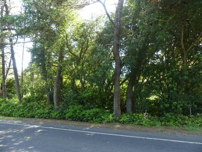 Florence Residential Lots & Land For Sale: Rhododendron Dr #3200