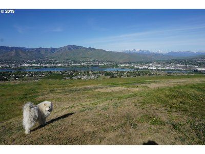 Farm & Ranch For Sale: Cougar Ridge Road