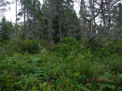 Bandon Residential Lots & Land For Sale: Chantrelle Dr #6