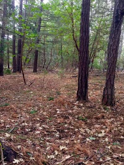 Rogue River Residential Lots & Land For Sale: W Evans Creek Lot 2700 Road