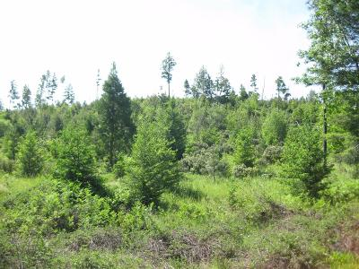 Josephine County Residential Lots & Land For Sale: 200 Suncrest Drive
