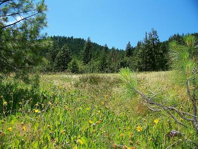 Applegate Residential Lots & Land For Sale: 5992 Thompson Creek Road