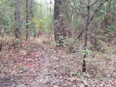 Josephine County Residential Lots & Land For Sale: 865 Hays Cut Off Road