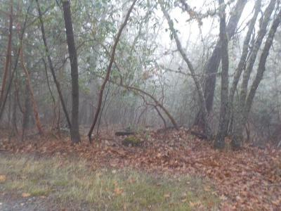 Josephine County Residential Lots & Land For Sale: Trollview TL#1200 Road