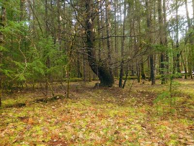 Josephine County Residential Lots & Land For Sale: Logan Cut Drive