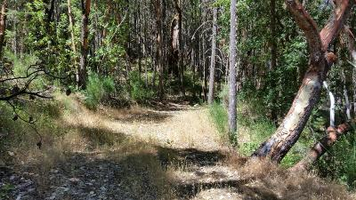 Josephine County Residential Lots & Land For Sale: 8448 Riverbanks Road