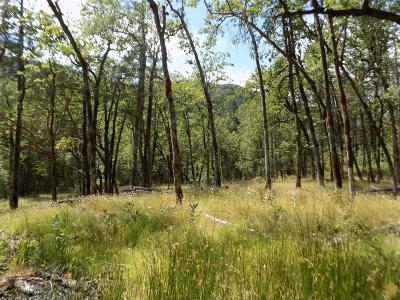 Merlin, Sunny Valley, Wimer, Rogue River, Wilderville, Grants Pass Residential Lots & Land For Sale: Ditch Creek TL204 Road