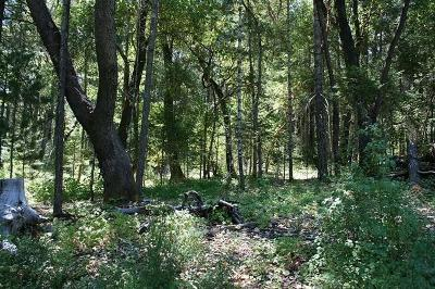 Merlin, Sunny Valley, Wimer, Rogue River, Wilderville, Grants Pass Residential Lots & Land For Sale: 268 Red Rock Lane