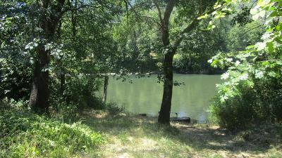 Jackson County, Josephine County Single Family Home For Sale: 8354 Rogue River Highway