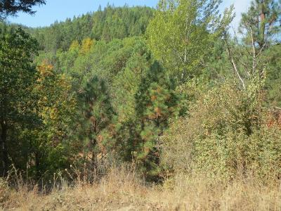 Rogue River Residential Lots & Land For Sale: Wards Creek Road