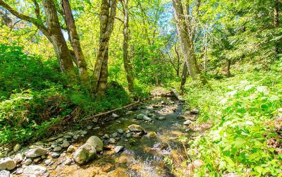 Gold Hill Single Family Home For Sale: 1821 Birdseye Creek Road