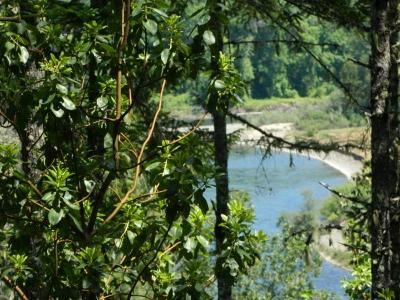 Josephine County Residential Lots & Land For Sale: 8888 Riverbanks Road