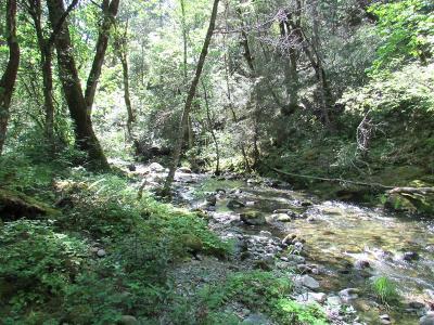 Residential Lots & Land For Sale: Murphy Creek TL206 Road
