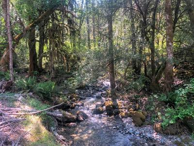 Residential Lots & Land For Sale: Murphy Creek Road