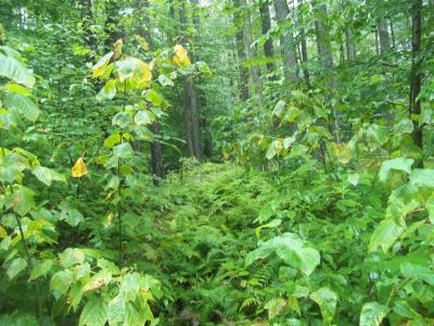 Laporte Residential Lots & Land For Sale: 27 Hilary Lane